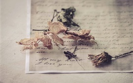 Preview wallpaper Dried flowers, letter
