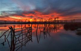 Cerca, árboles, lago, cielo rojo, nubes, puesta del sol
