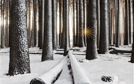 Preview wallpaper Forest, trees, snow, winter, sun rays