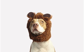 Preview wallpaper Funny animals, dog, hat