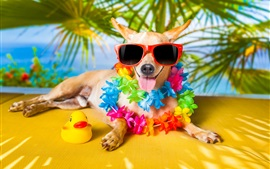 Preview wallpaper Funny dog, sunglasses, flowers, toy duck, humor