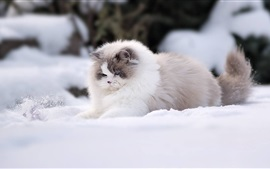 Furry cat play snow