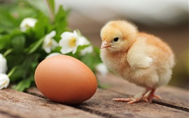 Preview wallpaper Furry chicken and egg