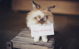 Furry rabbit, paper