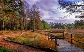 Preview wallpaper Germany, Kirchwalsede, autumn, trees, grass, river, bridge, autumn