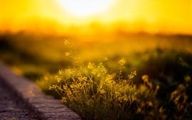 Preview wallpaper Grass, sunlight, morning