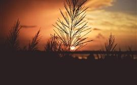 草、日の出、夜明け