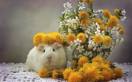 Preview wallpaper Guinea pig, dandelions, cherry flowers