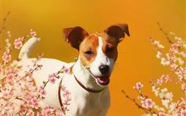 Preview wallpaper Happy dog, sakura, flowers