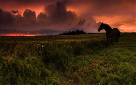 Preview wallpaper Horse, grass, red clouds, sunset