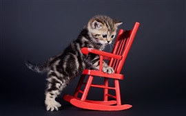 Gatinho e cadeira