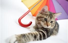 Preview wallpaper Kitten and umbrella