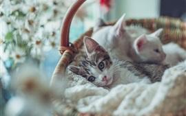 Preview wallpaper Kitten in basket, blurry