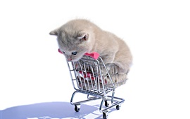 Preview wallpaper Kitten in shopping cart, white background