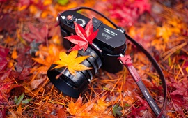 Preview wallpaper Leica camera, red maple leaves, autumn