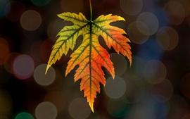 Preview wallpaper Maple leaf, bokeh, autumn