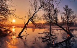 Morning, trees, river, sunrise, fog
