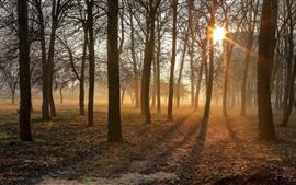 Утро, деревья, солнечные лучи, туман