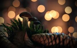 Cogumelos, círculos de luz brilhante