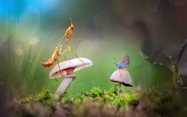 Preview wallpaper Mushrooms, mantis, butterfly