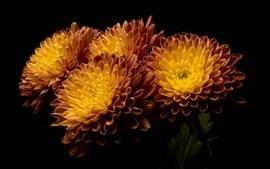 미리보기 배경 화면 오렌지 꽃, 검은 배경