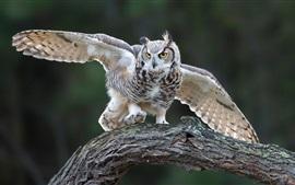 Открытые крылья совы