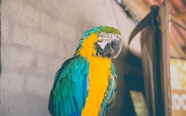 Preview wallpaper Parrot, macaw, bird photography