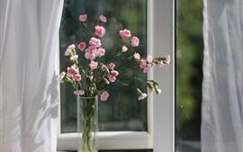 壁紙のプレビュー ピンクカーネーション、花、花瓶、窓