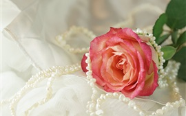 Preview wallpaper Pink rose, pearl, necklace