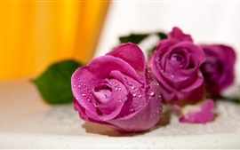 Preview wallpaper Purple roses, water drops, bokeh