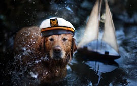 Preview wallpaper Retriever, dog, cap, water, boat, like a captain
