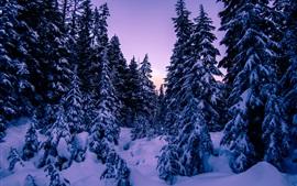 Preview wallpaper Snow, fir trees, winter, dusk