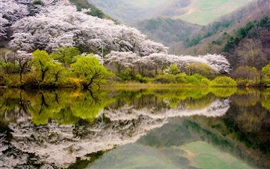 Preview wallpaper Spring, lake, flowers, water reflection, Korea