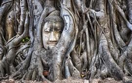 Tailandia, Ayutthaya, Buda, árbol
