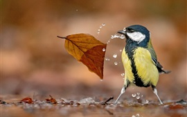 Preview wallpaper Tit and leaf, water drops