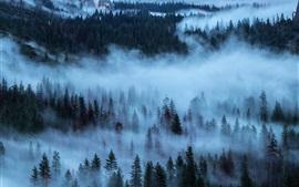 Árboles, bosque, niebla