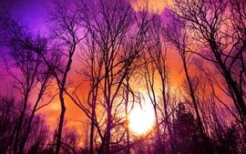 Деревья, фиолетовое небо, закат, солнце
