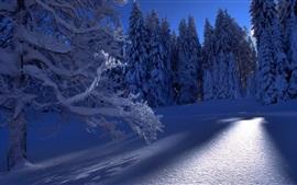Trees, snow, sun rays, cold winter