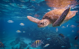 Preview wallpaper Turtle and fish, underwater, sea