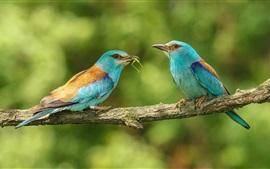 Dois pássaros, insetos