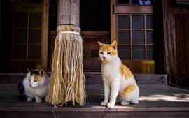 Dois gatos, porta