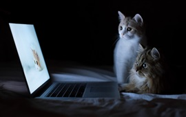 Two cats look at laptop screen, funny animals
