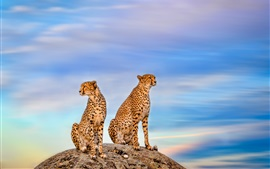 Preview wallpaper Two cheetahs, blue sky