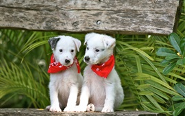 Preview wallpaper Two cute white dogs, bench