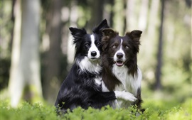 Две собаки, друзья, трава