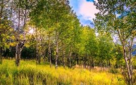 США, Колорадо, осины, трава, осень
