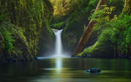 USA, river, waterfall, trees, green