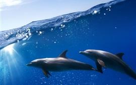 Subaquático, dois golfinhos, mar azul