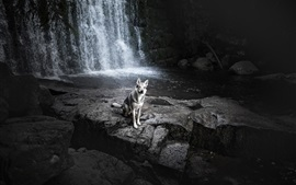 壁紙のプレビュー 滝、犬、岩