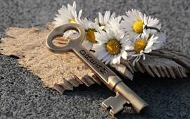 Preview wallpaper White daisies, keys